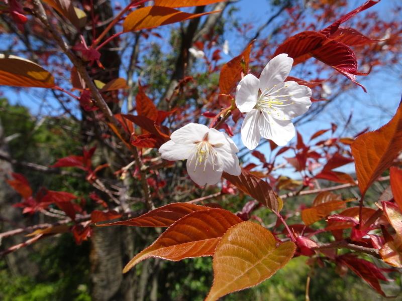 孝子の森は春である  by  (TATE-misaki)_c0108460_00552050.jpg