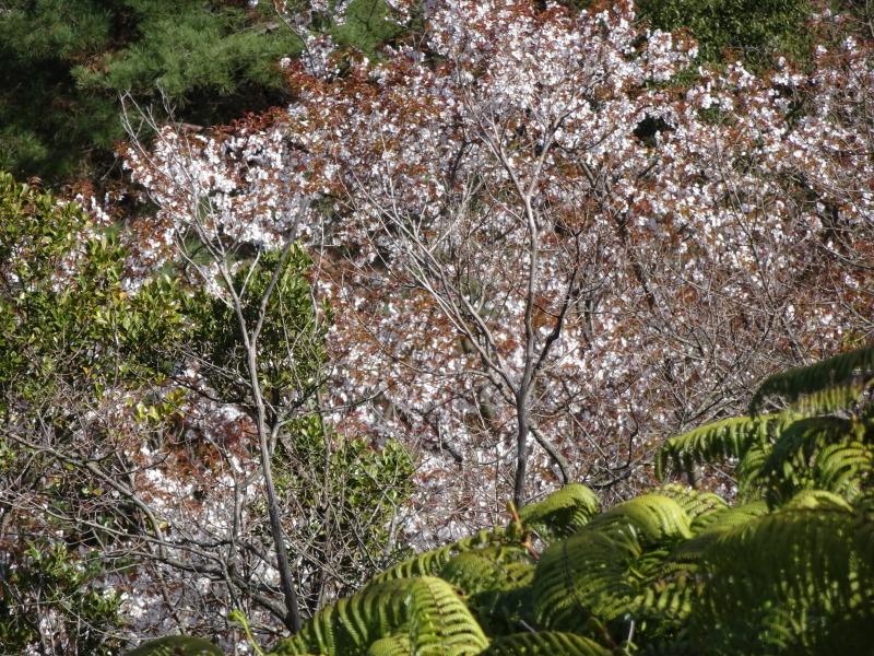 孝子の森は春である  by  (TATE-misaki)_c0108460_00552221.jpg