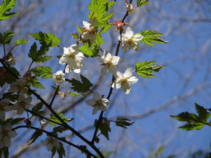 孝子の森は春である  by  (TATE-misaki)_c0108460_00552437.jpg