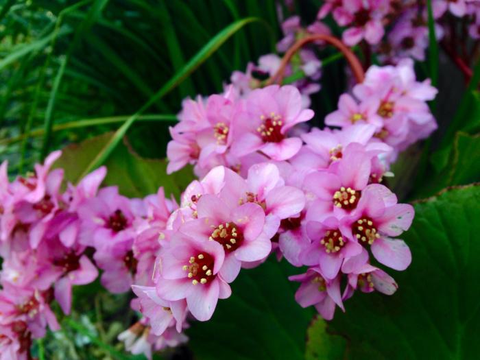 桜、連翹、猫柳、雪柳、花桃、ツツジ…_b0087077_17221399.jpg