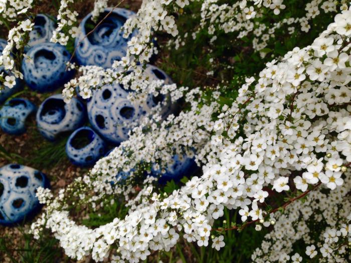 桜、連翹、猫柳、雪柳、花桃、ツツジ…_b0087077_17221547.jpg
