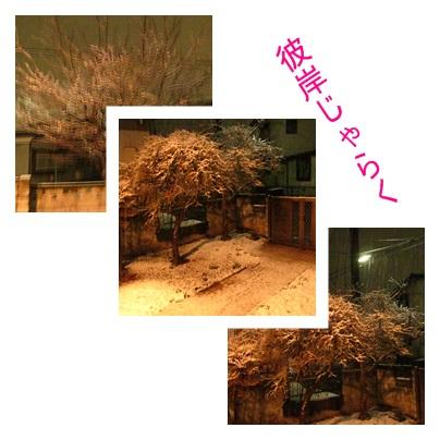 b0124693_2040453.jpg