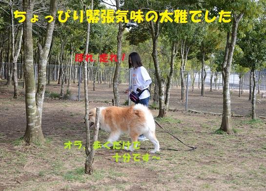 f0121712_15253724.jpg