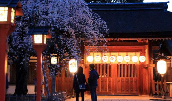 2016桜だより5 平野神社 魁さくら_e0048413_16314648.jpg
