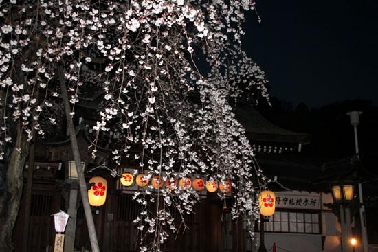 2016桜だより5 平野神社 魁さくら_e0048413_16315777.jpg