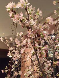 東海桜_e0025817_22424389.jpg