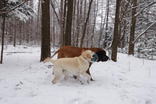 また雪が降りました_e0192217_951142.jpg