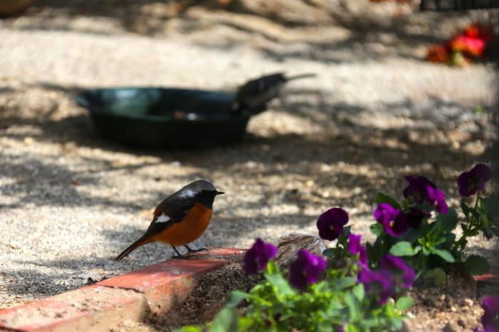 福島市 自宅庭 「今日の野鳥」_d0106628_14385940.jpg