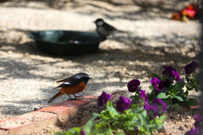 福島市 自宅庭 「今日の野鳥」_d0106628_14391692.jpg
