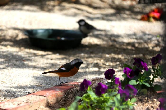 福島市 自宅庭 「今日の野鳥」_d0106628_14400609.jpg