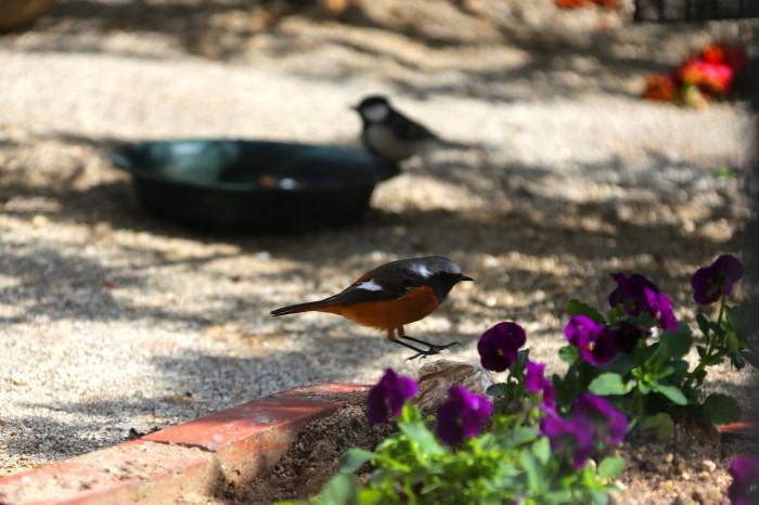 福島市 自宅庭 「今日の野鳥」_d0106628_14404965.jpg