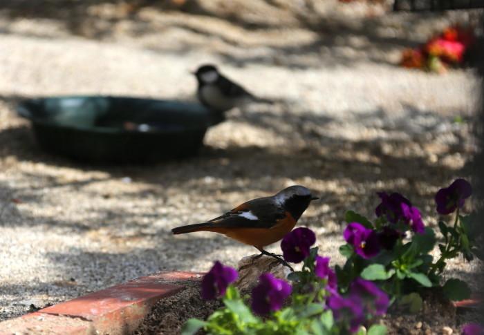 福島市 自宅庭 「今日の野鳥」_d0106628_14410012.jpg