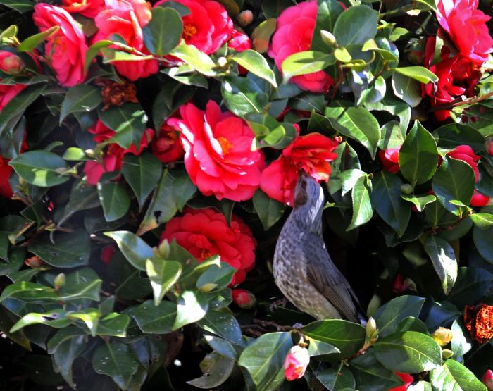 福島市 自宅庭 「今日の野鳥」_d0106628_21301147.jpg