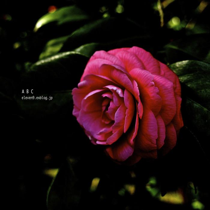 tsubaki -fes_f0315034_13150131.jpg