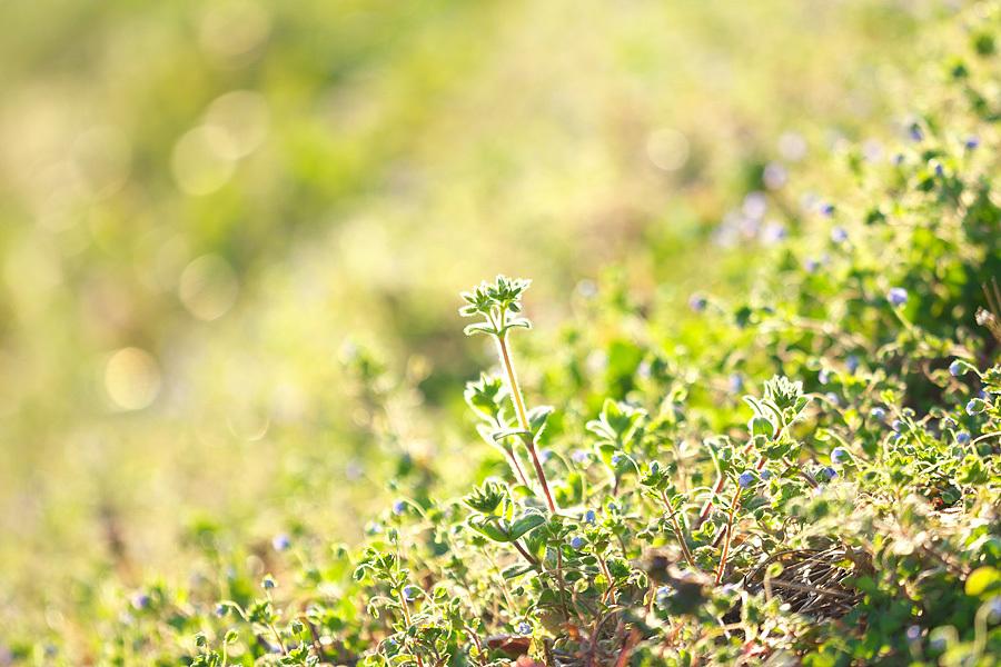 春の草むら ~夕景~_c0067040_23380550.jpg