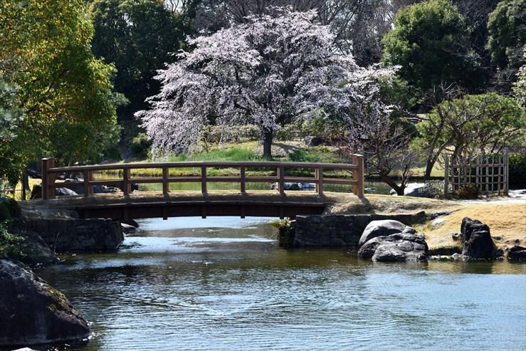 白鳥庭園のしだれ桜_e0170058_18405547.jpg