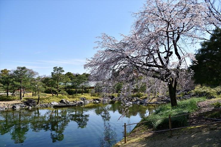 白鳥庭園のしだれ桜_e0170058_18412122.jpg
