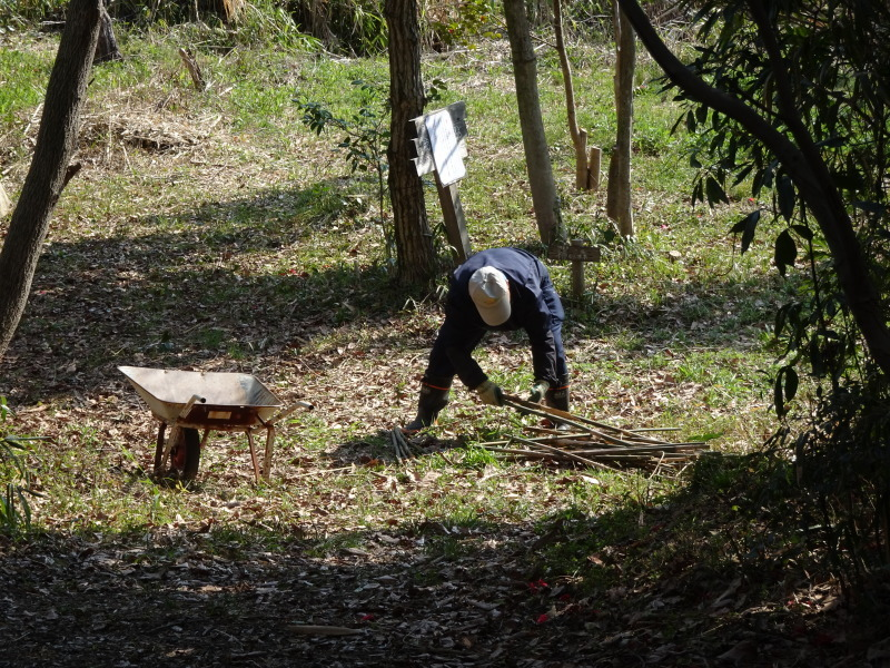 ハンノキ林の整備ほぼ完了・・・うみべの森_c0108460_21275410.jpg