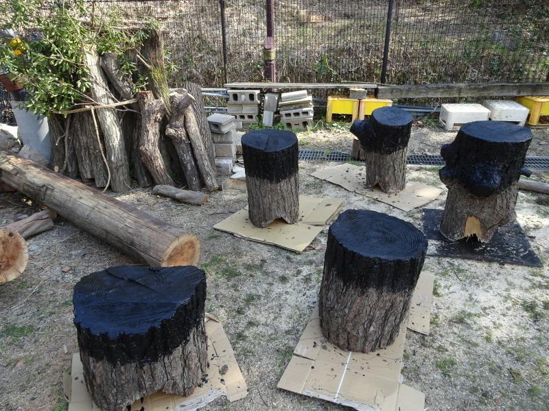 ハンノキ林の整備ほぼ完了・・・うみべの森_c0108460_21452524.jpg