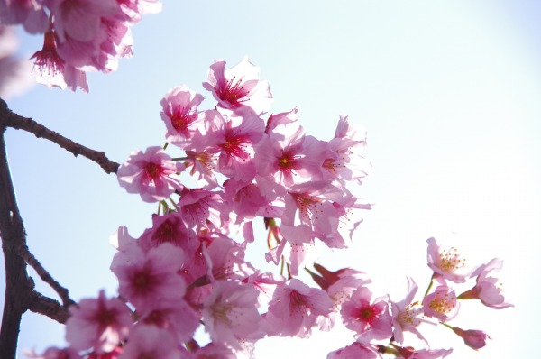 Pink-Red Spring Blossoms_b0078188_21414828.jpg