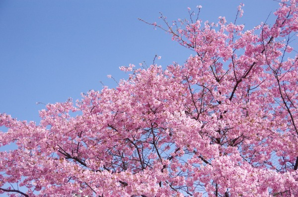 Pink-Red Spring Blossoms_b0078188_21423397.jpg