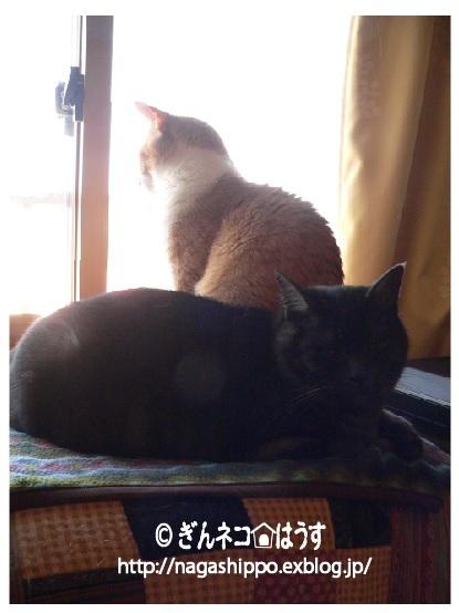 空振り_a0333195_06495548.jpg