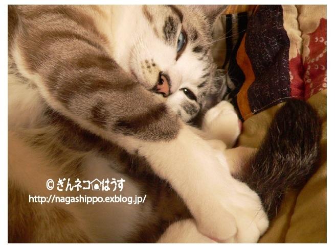 空振り_a0333195_07200063.jpg