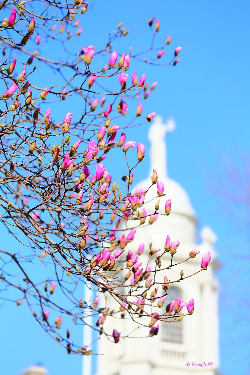 春の始まり_a0274805_05462364.jpg