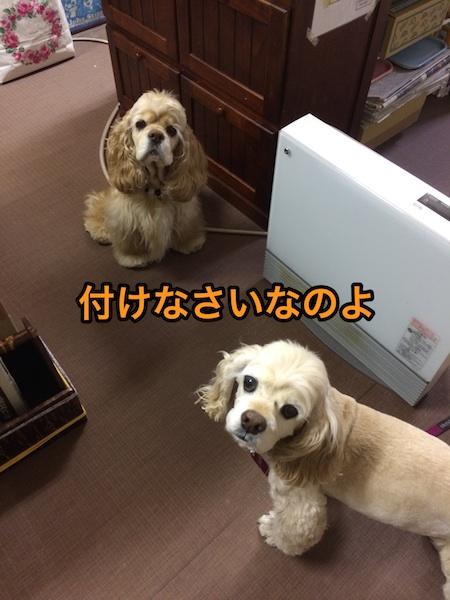 b0067012_1135085.jpg
