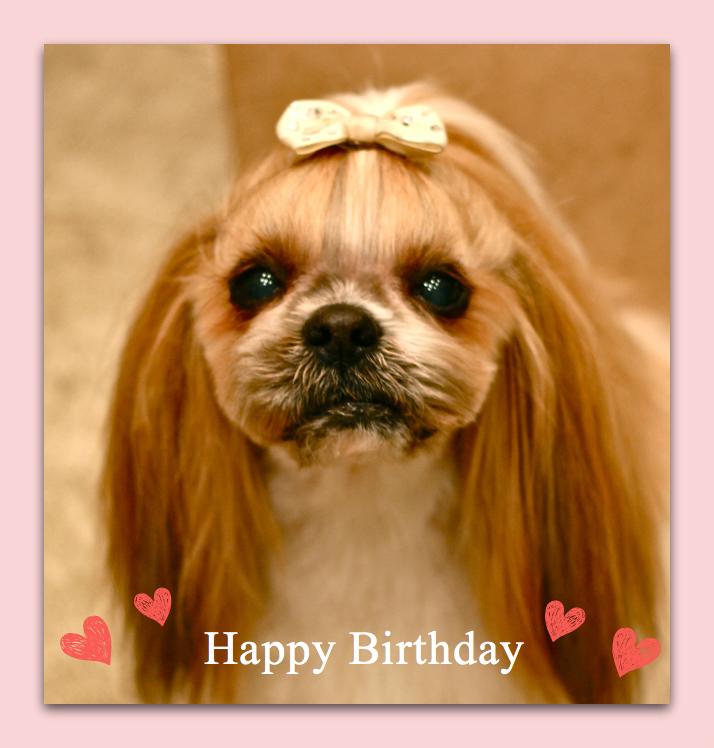 Happy Birthday♡マロンくん_d0060413_19443150.jpg