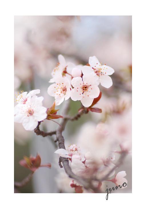 d0026414_20101662.jpg