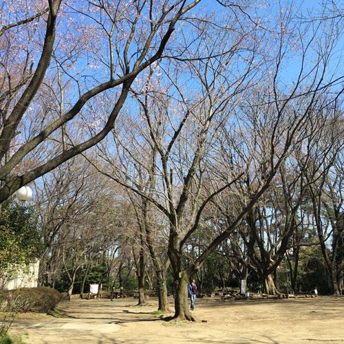 桜パトロール。_a0026127_1245148.jpg
