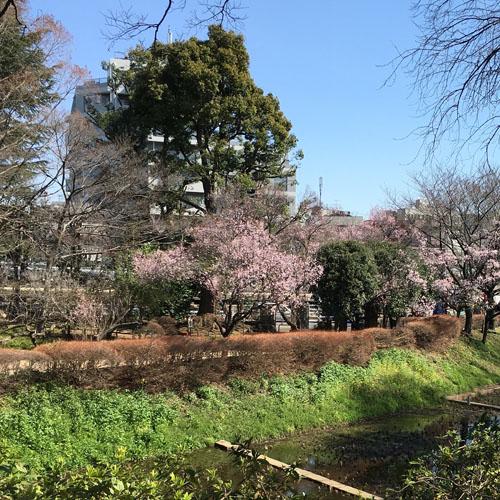 桜パトロール。_a0026127_12461282.jpg