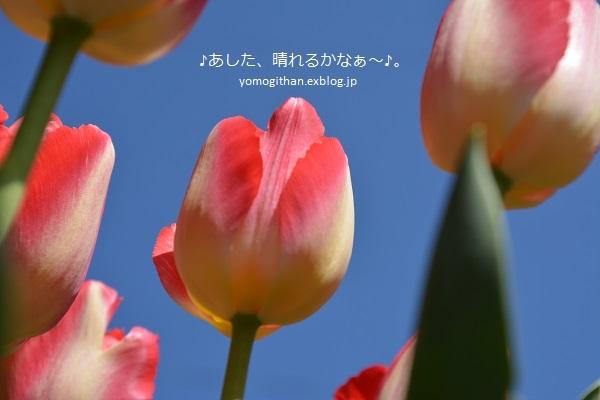 c0359535_21400367.jpg