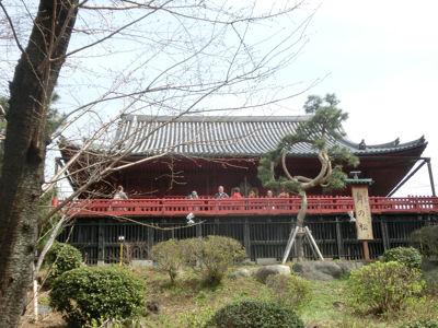 上野は一分咲き「東京ウォーク」_f0019247_1513996.jpg