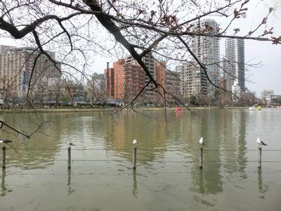上野は一分咲き「東京ウォーク」_f0019247_154428.jpg