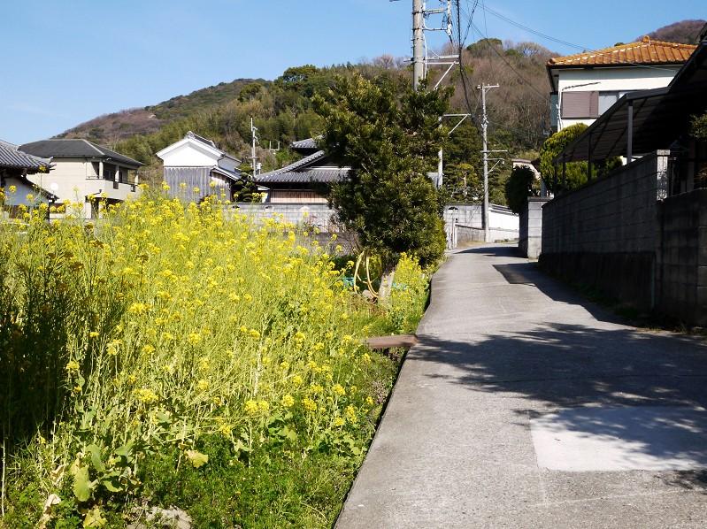 菜の花咲く里山を行く_b0093754_2313720.jpg
