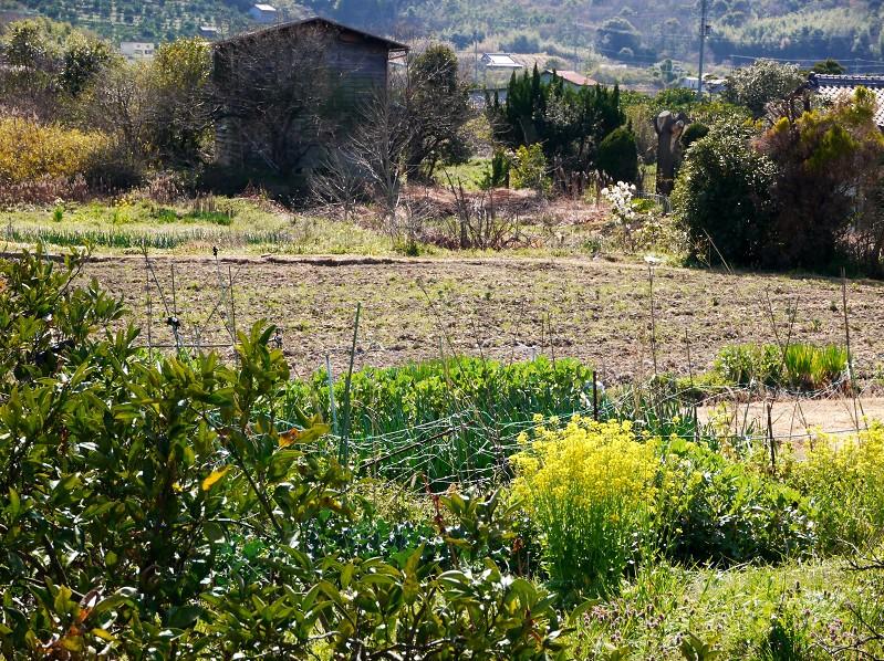 菜の花咲く里山を行く_b0093754_2335375.jpg