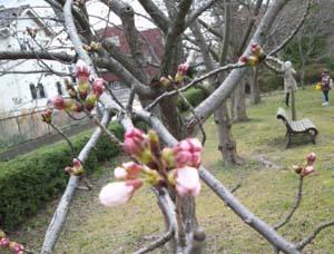 3月の外遊び報告_d0131255_11525618.jpg