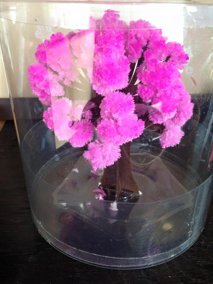 桜のもこもこ_a0164470_15105618.jpg