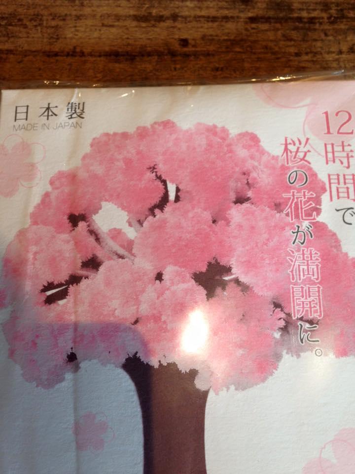 桜のもこもこ_a0164470_1511661.jpg