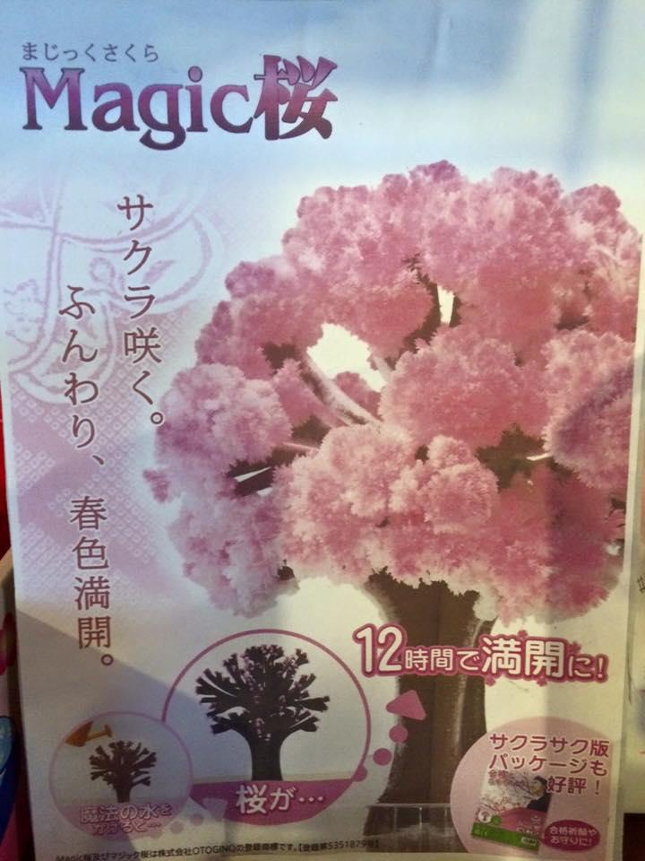 マジック桜人気です!_a0164470_16221481.jpg