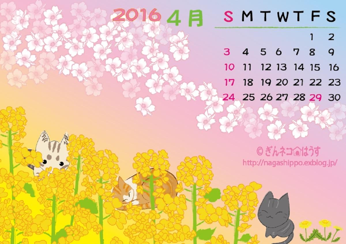 ギンネコ☆はうすの菜の花と桜_a0333195_22465087.jpg