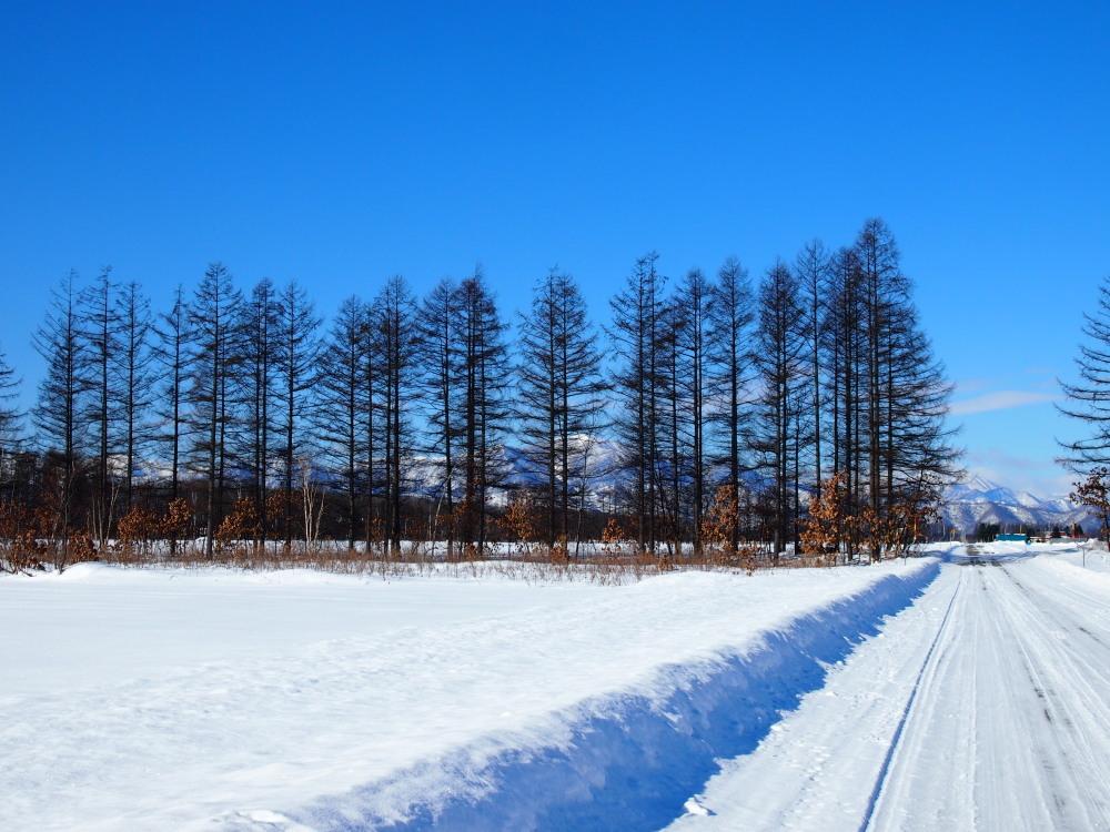 冬は快晴の日が多い十勝・・中札内村・村道47号線をゆく。_f0276498_13445079.jpg