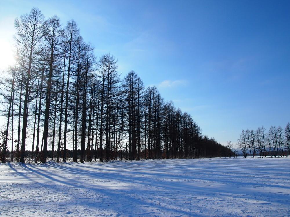 """マイナス23℃の朝、札内川周辺で見かけた""""ダイヤモンドダスト""""_f0276498_14253431.jpg"""