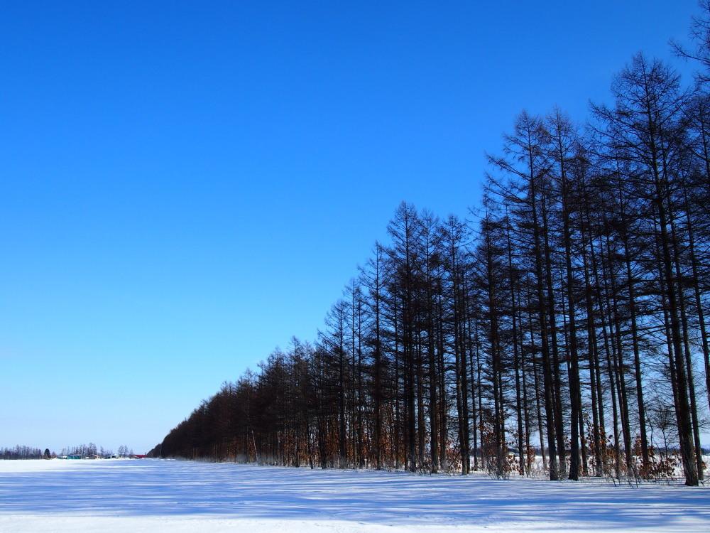 """マイナス23℃の朝、札内川周辺で見かけた""""ダイヤモンドダスト""""_f0276498_14260465.jpg"""