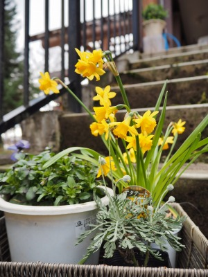 春の準備ですⅡ_c0336902_20232999.jpg