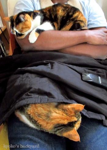 お猫様限定ですから_b0253205_01163180.jpg
