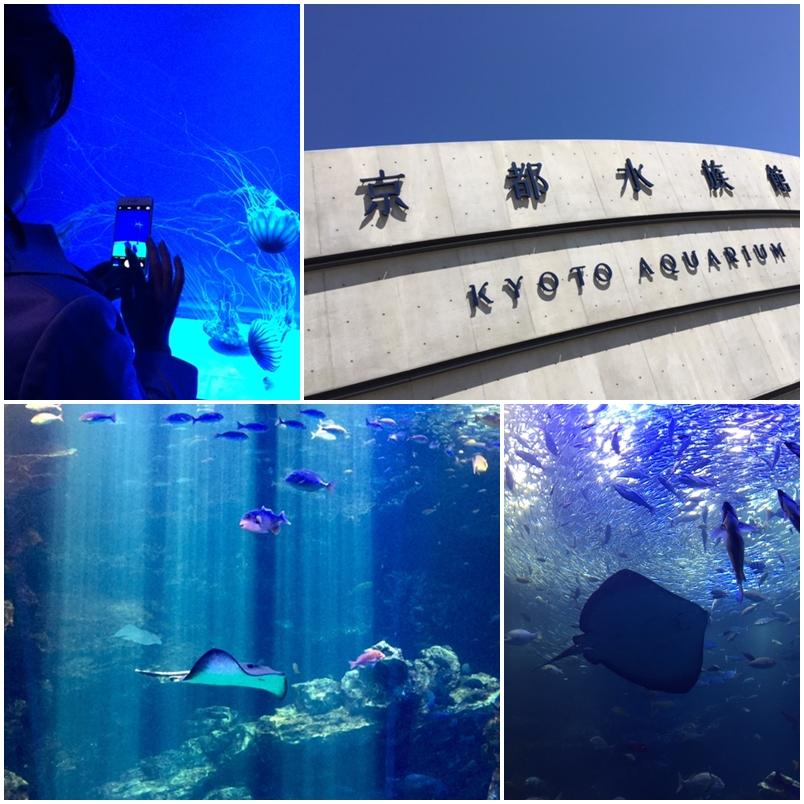 京都水族館_a0326106_1101380.jpg