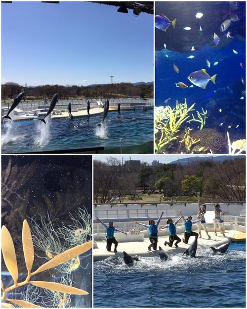 京都水族館_a0326106_1103999.jpg